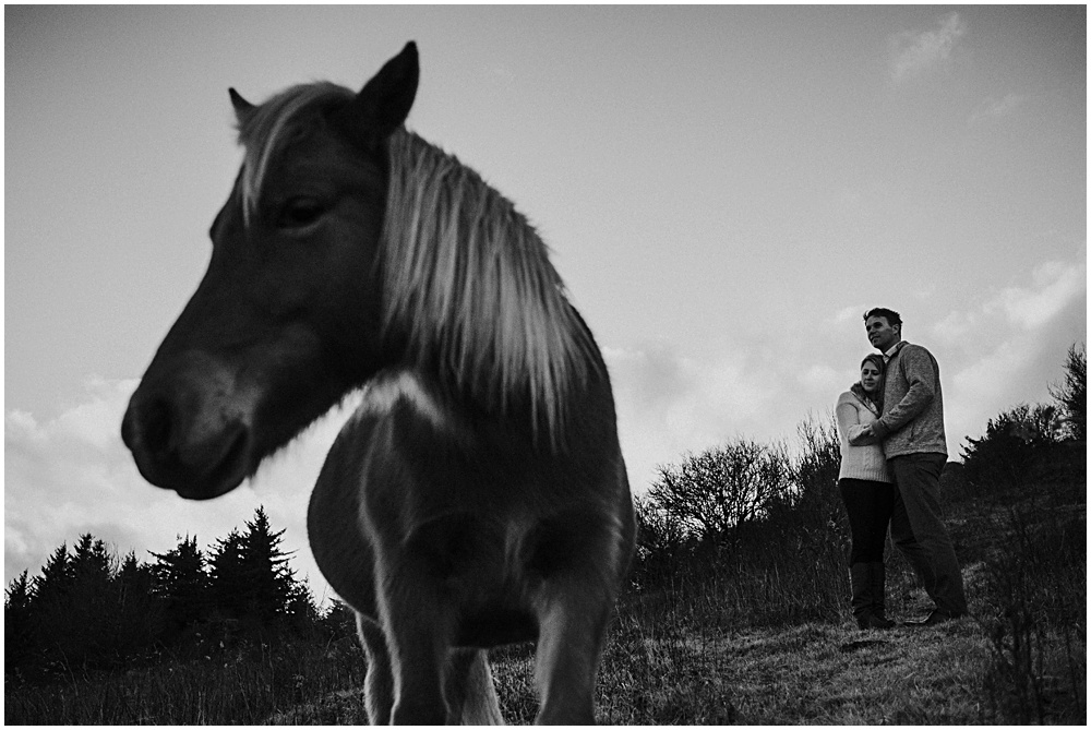 Wild Ponies in Virginia Couples Session