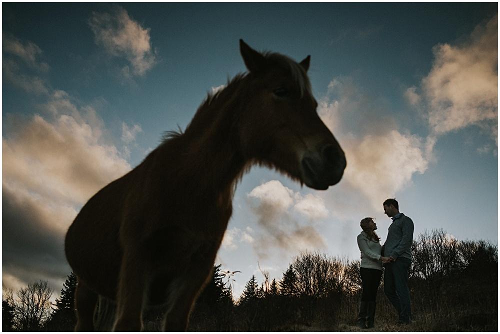 Wild Ponies Virginia Mountains