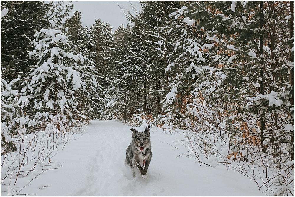 Dog Friendly Hikes Winter