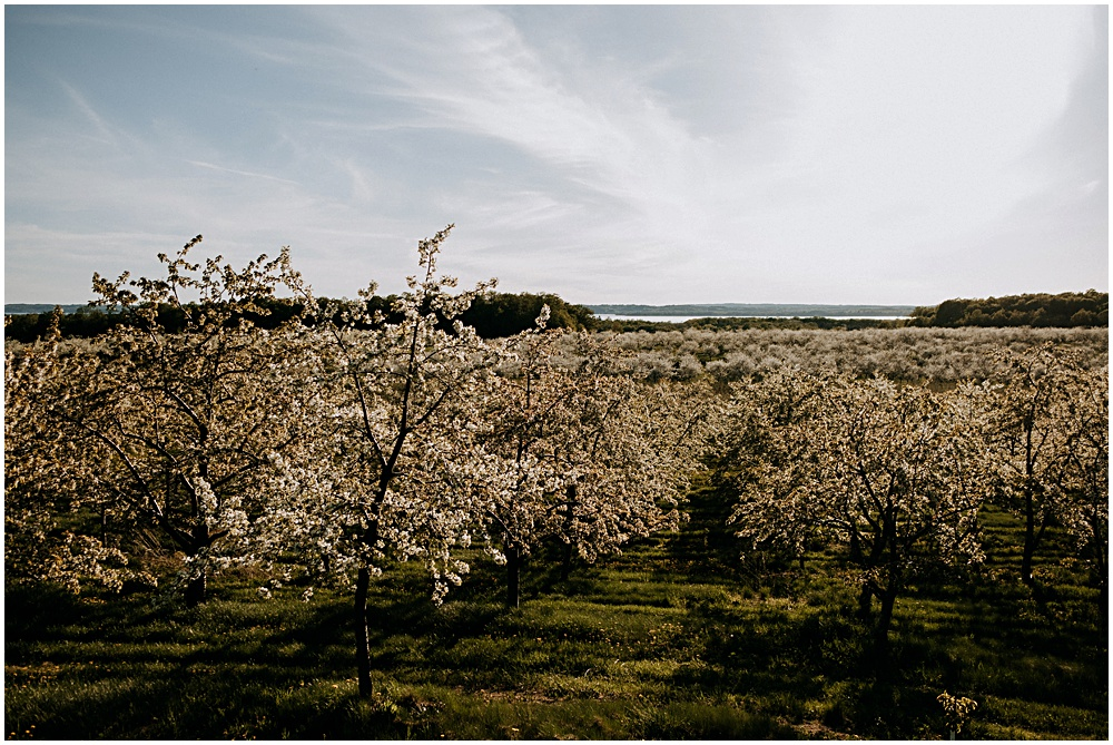 Old Mission Peninsula Cherry Orchards