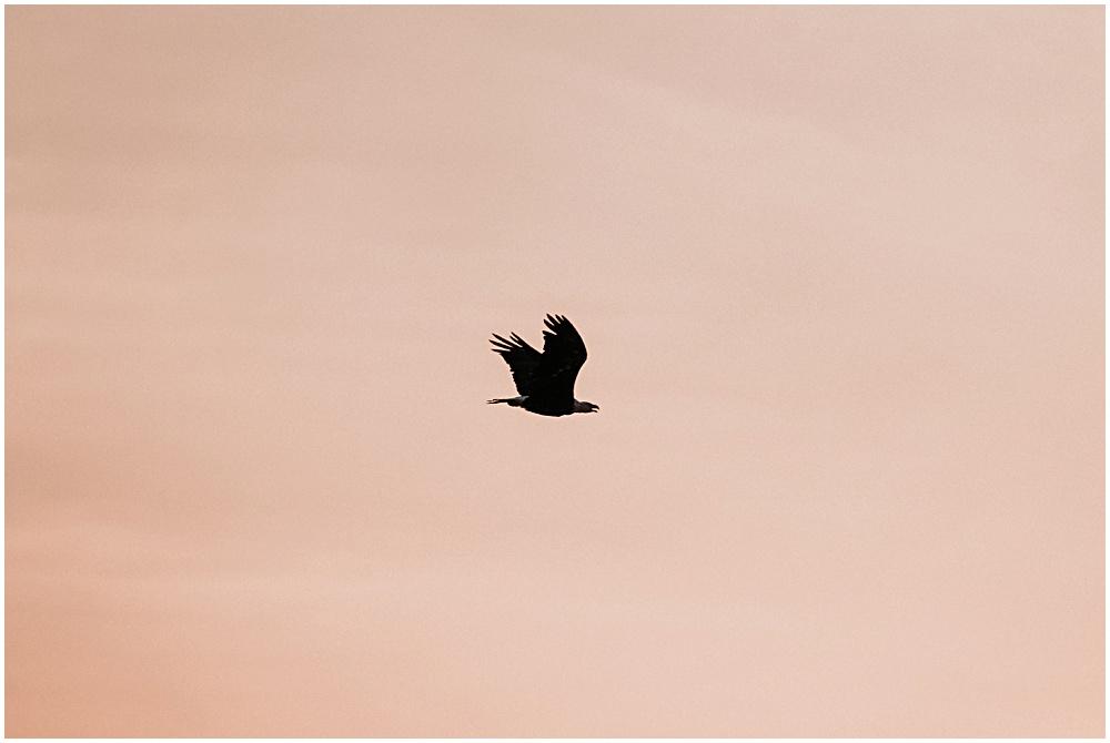Lake Bluff Preserve Eagle
