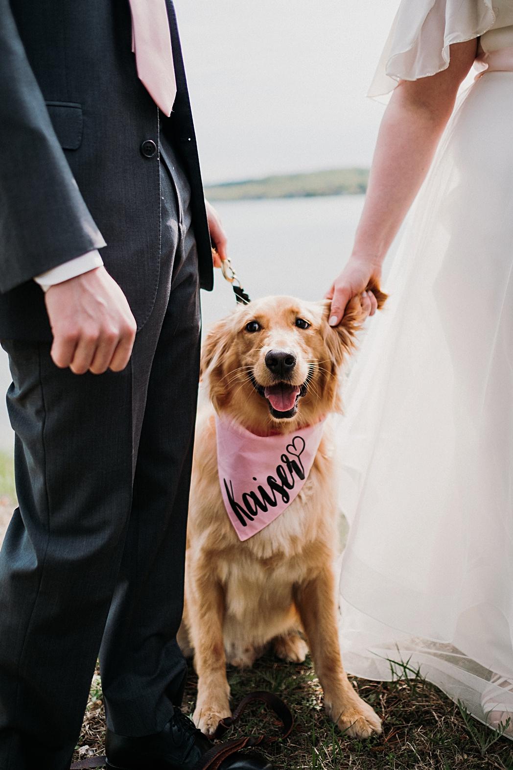 Wedding Ceremony Beach Dog