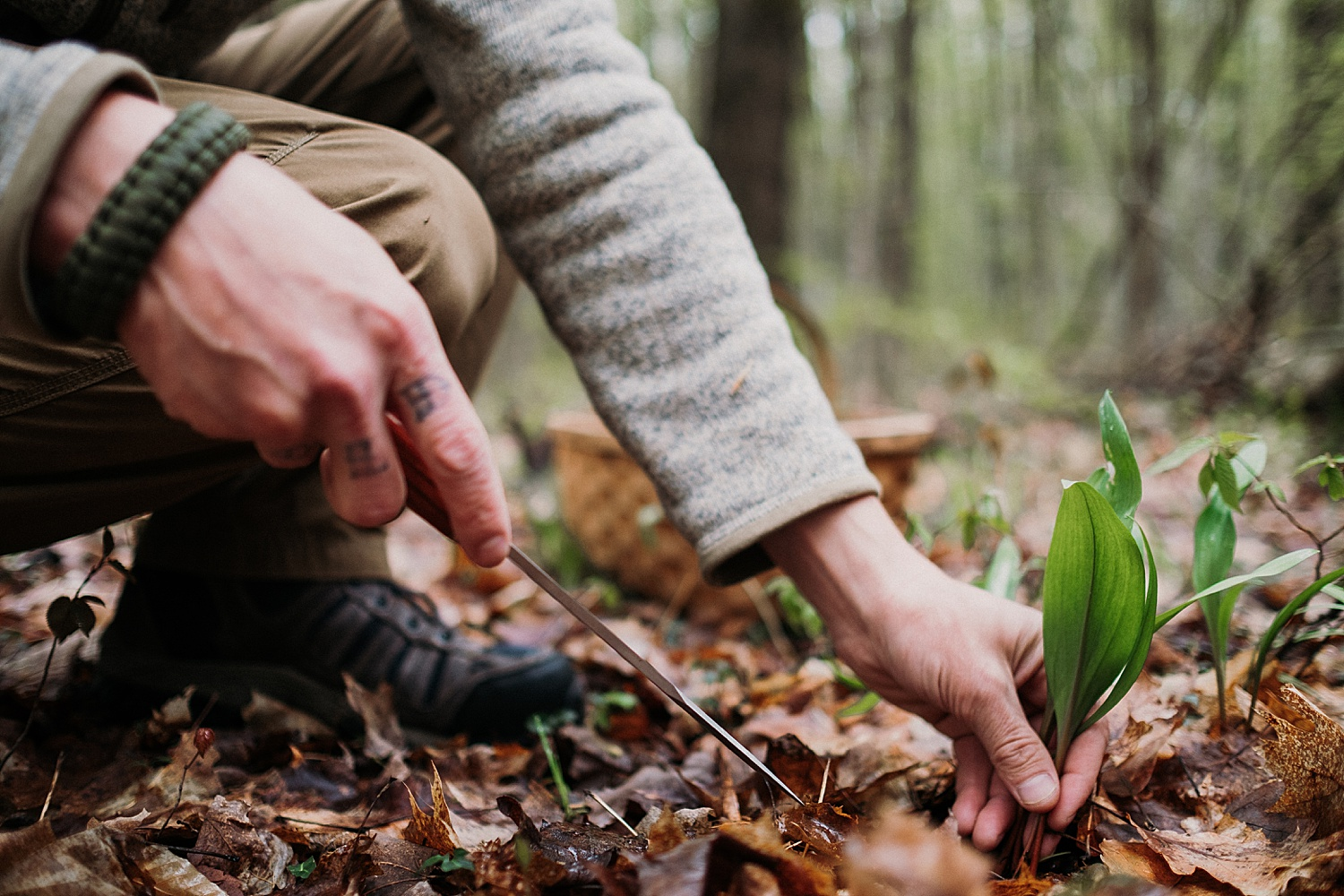 Foraging Ramps Northern Michigan