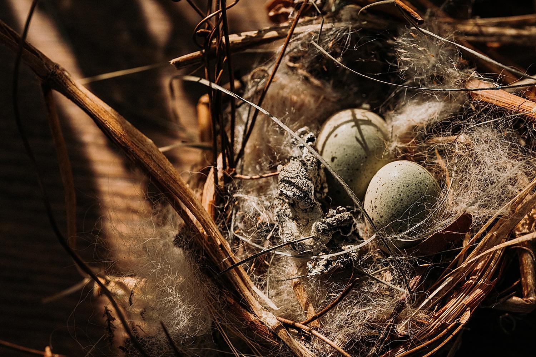 Birds Nest Forage Michigan