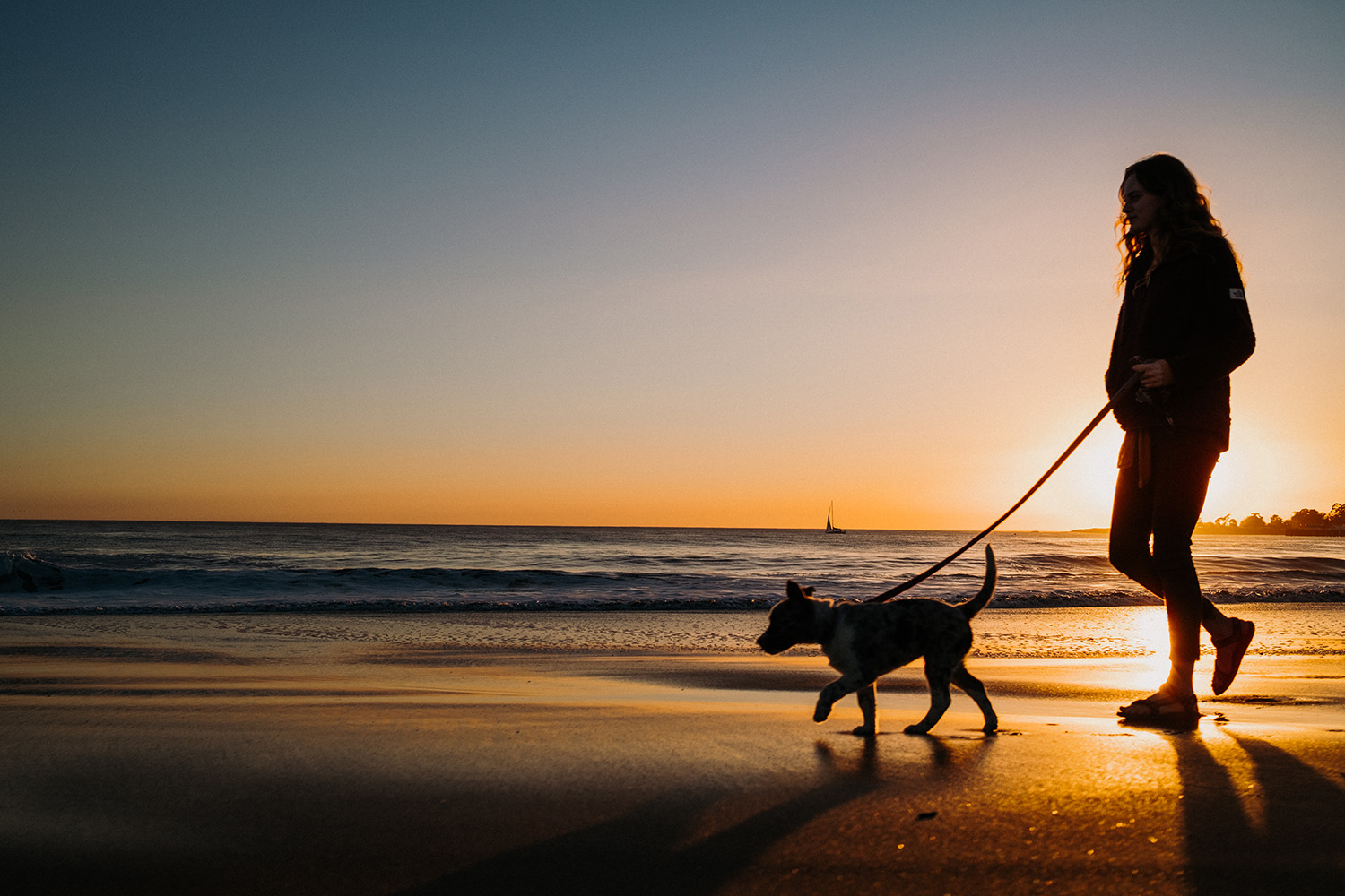 Texas Heeler Beach Walking Santa Cruz CA